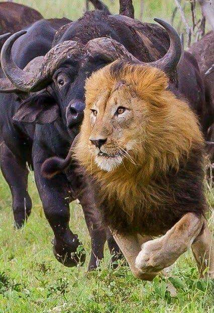 19b954711d6b8fc026435f33f1a3a768--crazy-animals-wild-animals